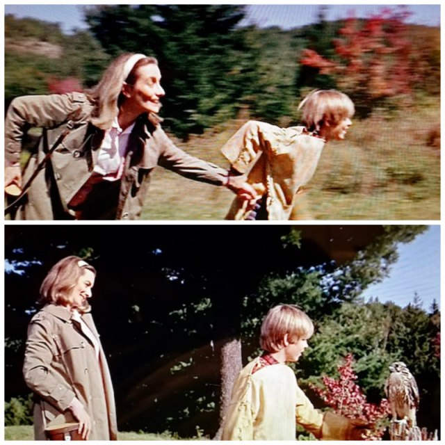 Reel Librarians | Screenshots of the librarian meeting Sam's falcon in 'My Side of the Mountain' (1969)
